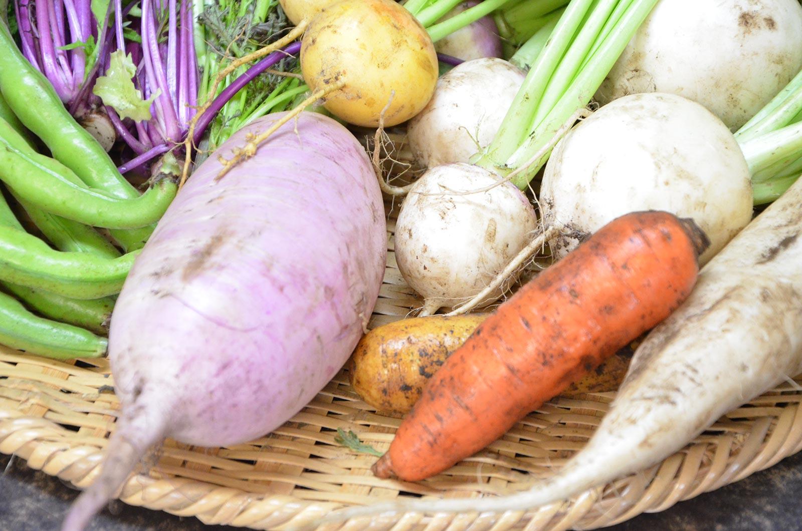 食育・栄養指導
